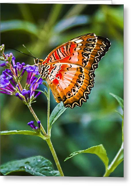 Vlinder Greeting Cards - Orange White and Black Stripes on Purple Greeting Card by Karen Stephenson