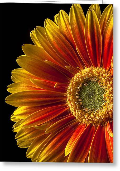 Gerbera Greeting Cards - Orange yellow mum close up Greeting Card by Garry Gay