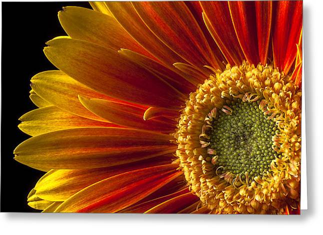 Orange yellow mum close up Greeting Card by Garry Gay