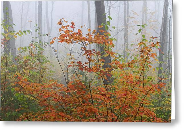 Western Ma Photographs Greeting Cards - Orange You Glad Greeting Card by Juergen Roth
