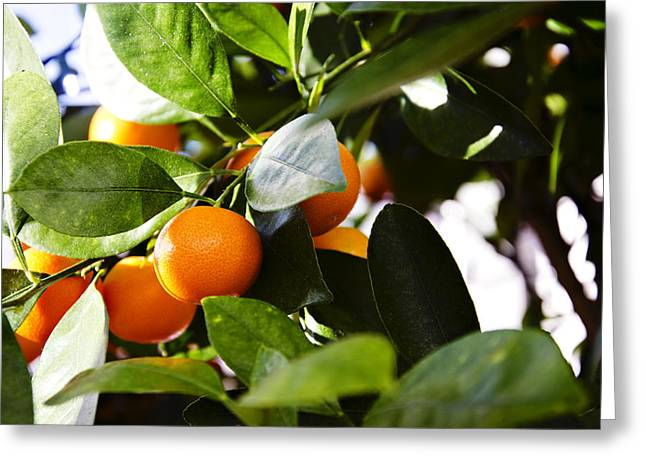 Fruit Tree Art Print Greeting Cards - Orange You Glad To See Me Greeting Card by Ricky Barnard