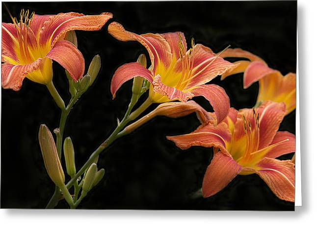 Day Lilly Digital Greeting Cards - Orangeliliesonblack Greeting Card by Susan Crossman Buscho