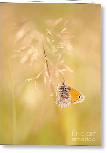 Antena Greeting Cards - Orangle butterfly sitting on a dry grass Greeting Card by Jaroslaw Blaminsky