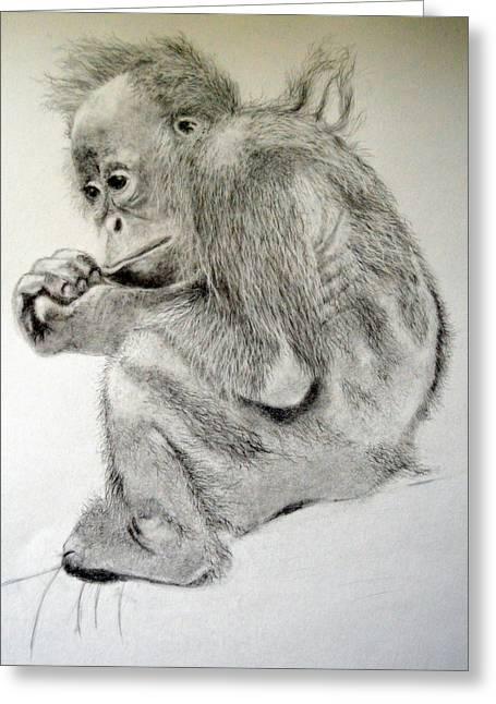 Orangutan Drawings Greeting Cards - Orangutan Baby Greeting Card by Rosanna Maria
