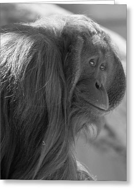 Orangutans Greeting Cards - Orangutan Black And White Greeting Card by Dan Sproul
