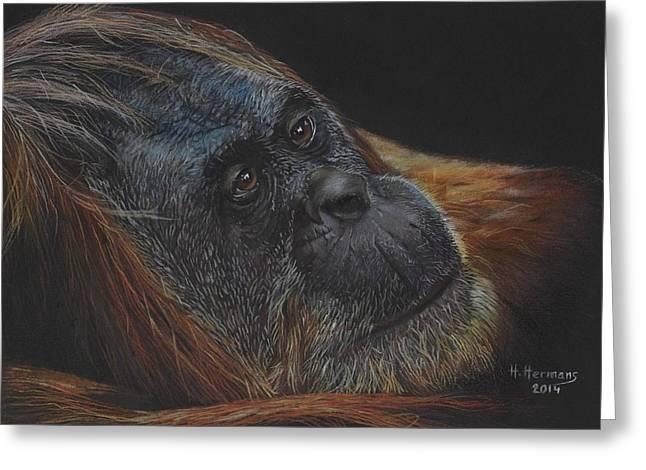 Orangutan Drawings Greeting Cards - Orangutan Greeting Card by Hendrik Hermans