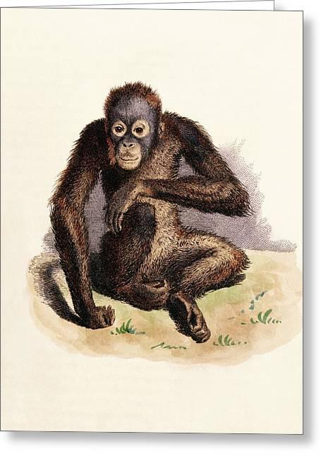 Orangutan Greeting Card by King's College London