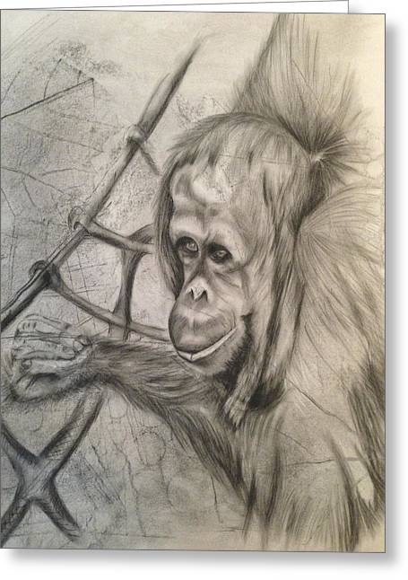 Orangutan Drawings Greeting Cards - Orangutan on Ropes Greeting Card by Leanne Blackwell