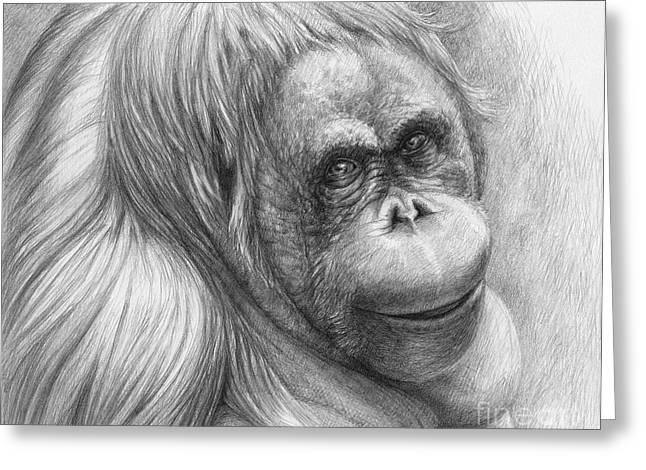 Orangutan Drawings Greeting Cards - Orangutan - Pongo pygmaeus Greeting Card by Svetlana Ledneva-Schukina