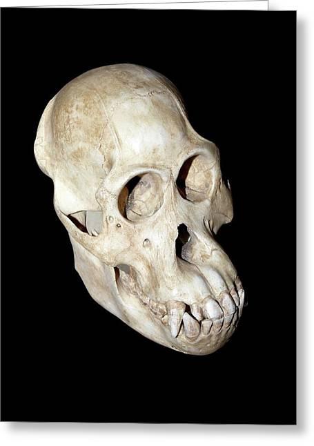 Orangutan Skull Greeting Card by Dirk Wiersma