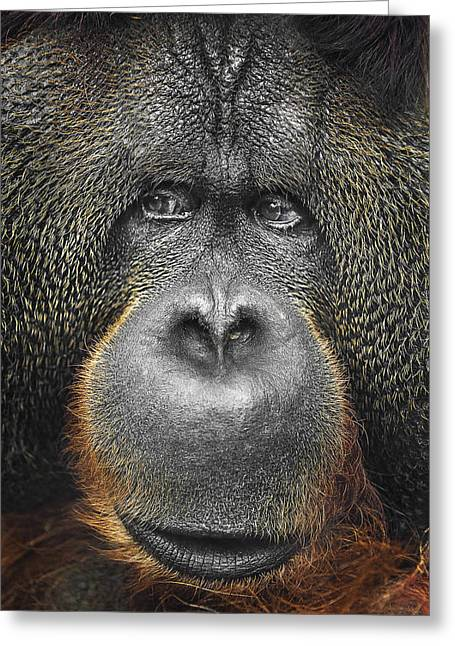 Orangutan Greeting Card by Svetlana Sewell