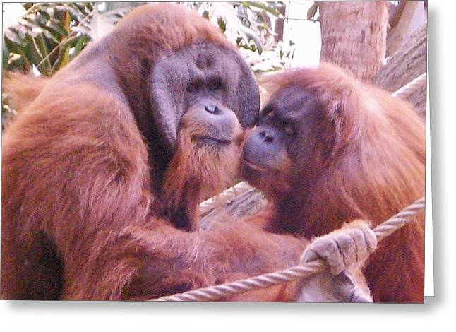 Animal Art Posters In Mixed Media Greeting Cards - Orangutans Greeting Card by Gunter  Hortz