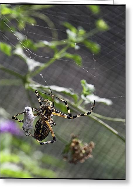 Creepy Digital Greeting Cards - Orb Spider 3 Greeting Card by Lynn Andrews