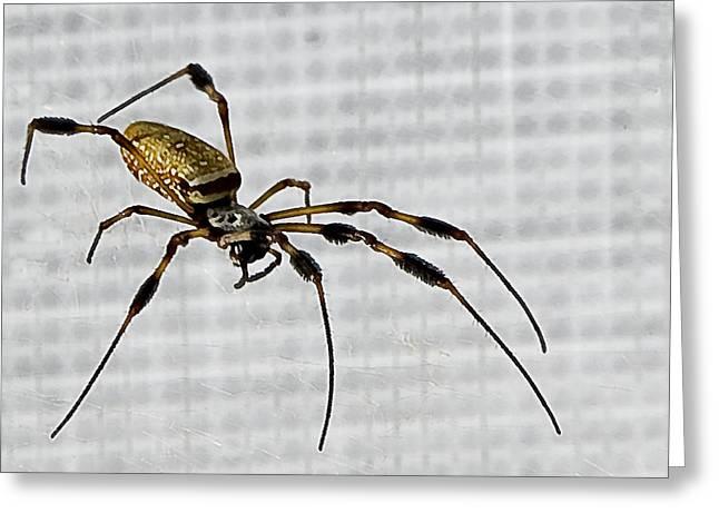 Creepy Digital Greeting Cards - Orb Spider 4 Greeting Card by Lynn Andrews