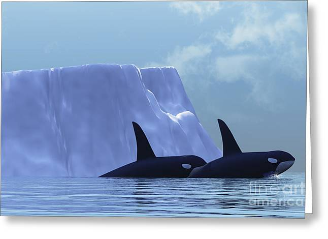 Sea Creature Pictures Greeting Cards - Orca Greeting Card by Corey Ford