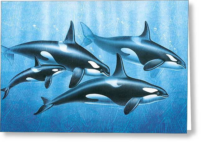 Ocean Mammals Greeting Cards - Orca Group Greeting Card by JQ Licensing