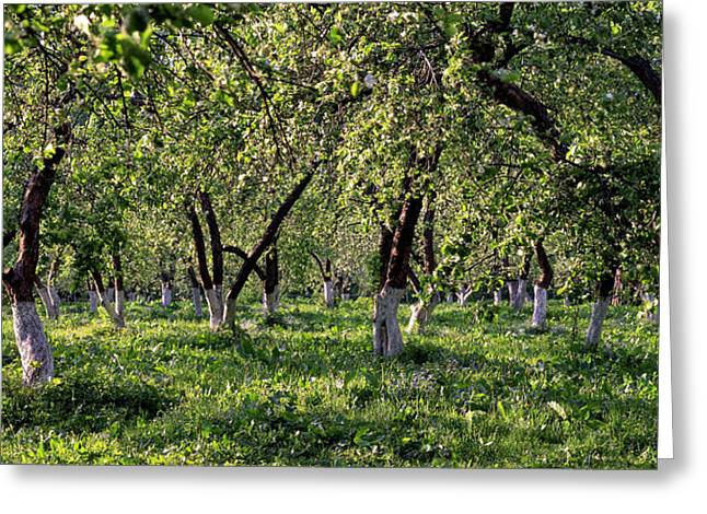 Orchard Greeting Card by Anonymous
