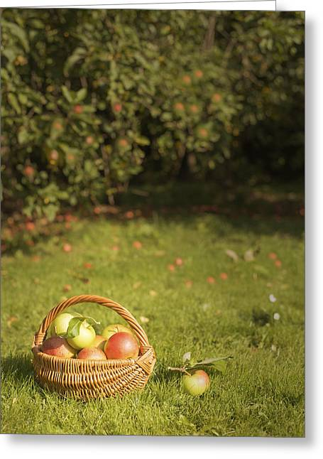 Apple Greeting Cards - Orchard Greeting Card by Amanda And Christopher Elwell