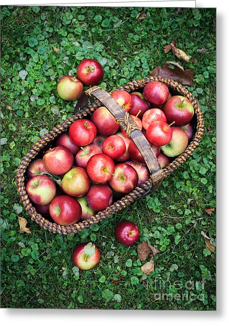 Orchard Fresh Picked Apples Greeting Card by Edward Fielding