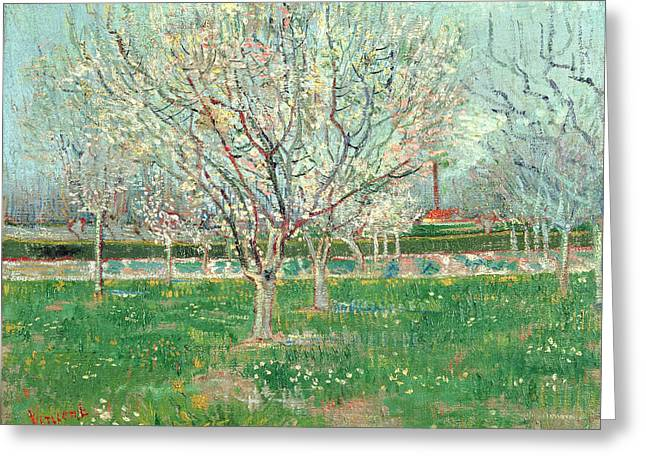 Impressionist Greeting Cards - Orchard In Blossom, 1880 Oil On Canvas Greeting Card by Vincent van Gogh