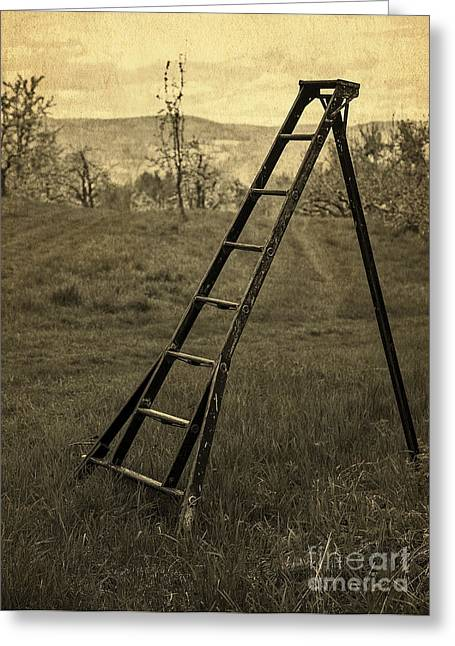 Wooden Stairs Greeting Cards - Orchard Ladder Greeting Card by Edward Fielding