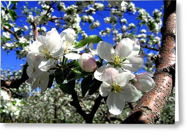 Okanagan Valley Greeting Cards - Orchard Ovation Greeting Card by Will Borden