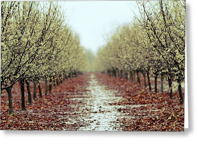 Orchard Greeting Cards - Orchard Greeting Card by Rebecca Cozart
