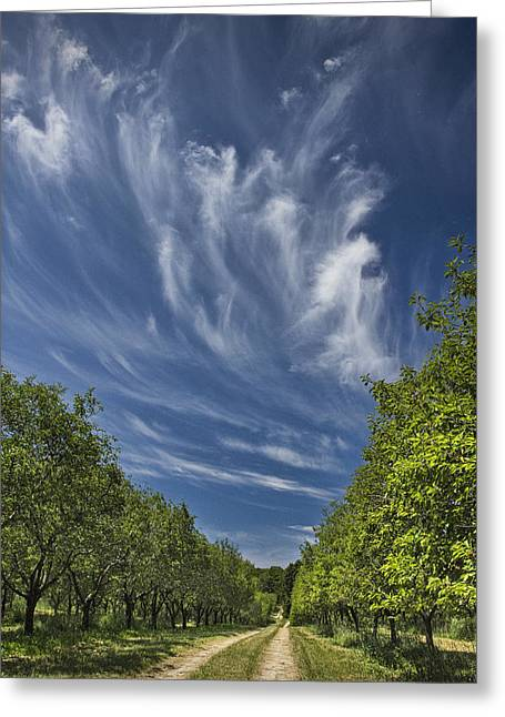 Harvest Art Greeting Cards - Orchard Road in West Michigan with Cirrus Clouds  Greeting Card by Randall Nyhof