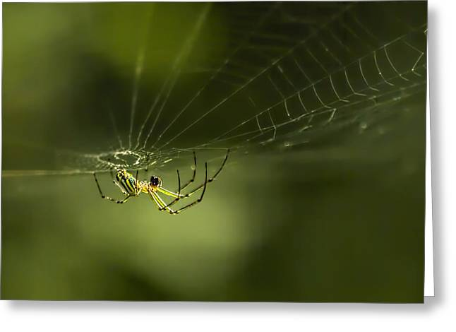 Wild Orchards Greeting Cards - Orchard Spider On Billy Goat Trail Greeting Card by Francis Sullivan
