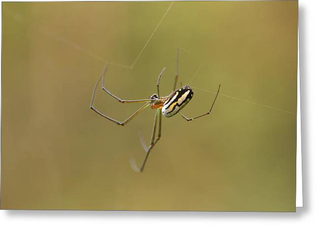 Wild Orchards Greeting Cards - Orchard Spider Greeting Card by Greg Allore