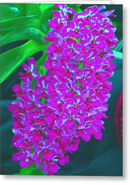 Recently Sold -  - Enhanced Greeting Cards - Orchid 14 Manipulated Greeting Card by Sheila Byers