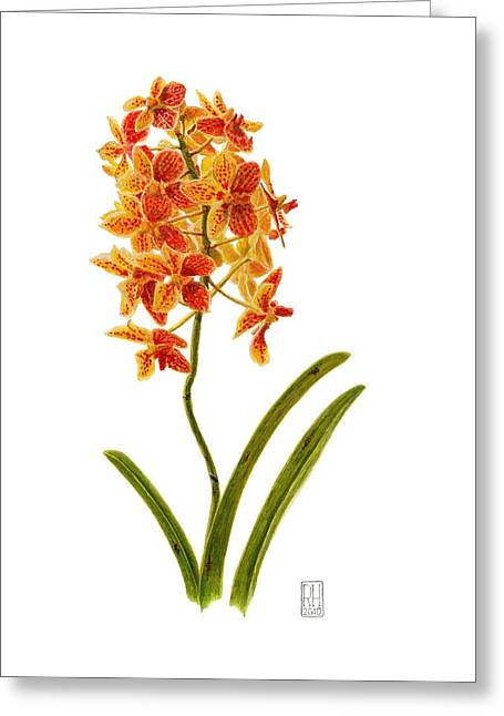Flowers Miami Greeting Cards - Orchid 2 Greeting Card by Richard Harpum