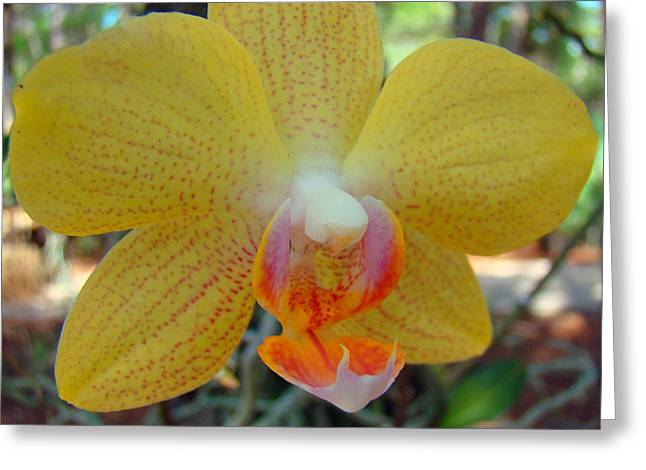 Flower Blossom Greeting Cards - Orchid 6 Greeting Card by Nancy L Marshall