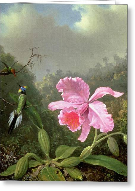 Vintage Painter Greeting Cards - Orchid And Hummingbirds Greeting Card by Martin Johnson Heade