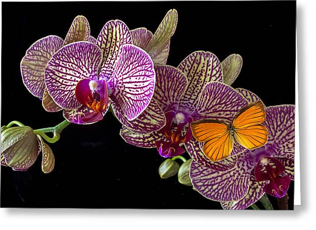 Botany Greeting Cards - Orchid and orange butterfly Greeting Card by Garry Gay