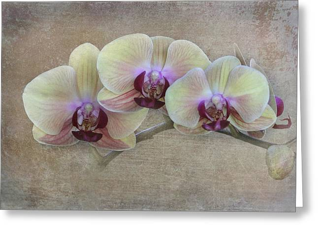 Yelllow Greeting Cards - Orchid Greeting Card by Angie Vogel