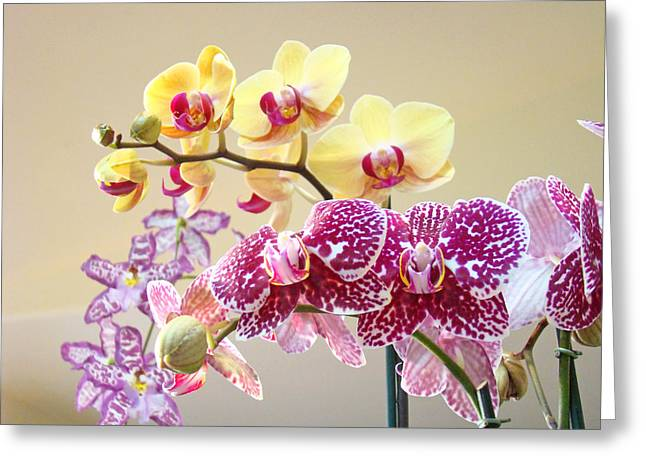 Orchid Art Prints Orchids Flowers Floral Bouquets Greeting Card by Baslee Troutman