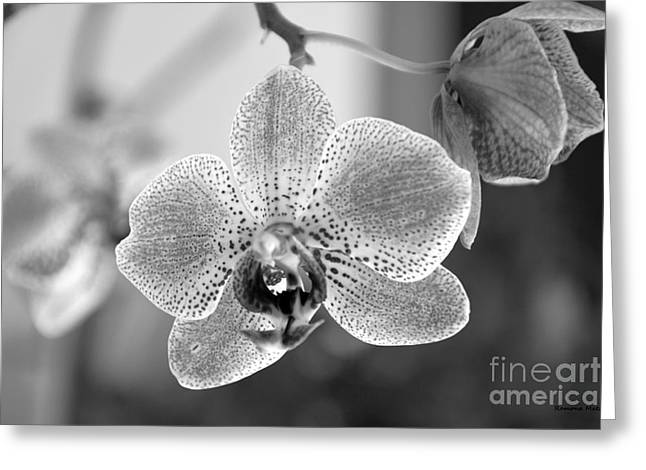 Multidimensional Greeting Cards - Orchid black and white Greeting Card by Ramona Matei