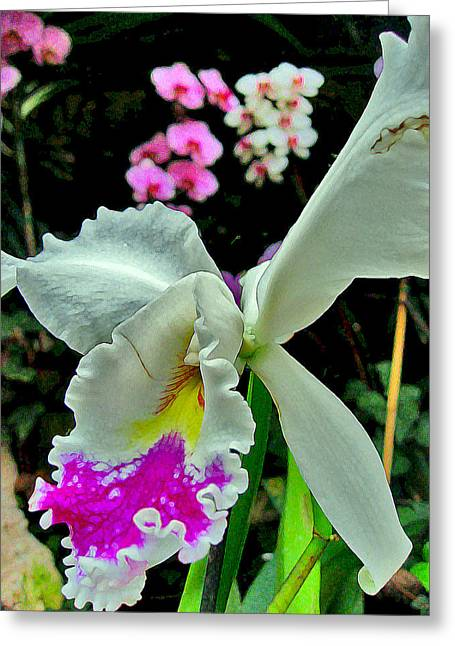 Arona Greeting Cards - Orchid. Canary Islands. Greeting Card by Andy Za