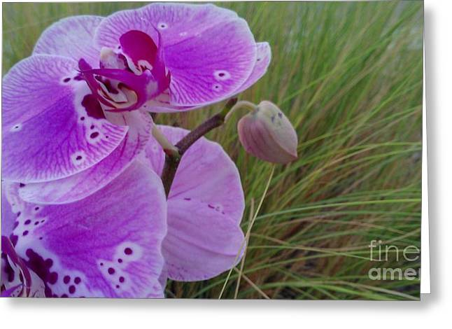 Commendation Greeting Cards - Orchid Greeting Card by Chris Tarpening