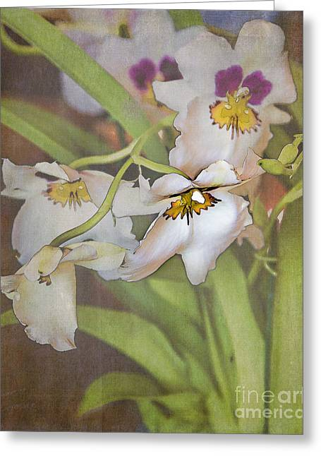 Tn Greeting Cards - Orchid display Greeting Card by TN Fairey