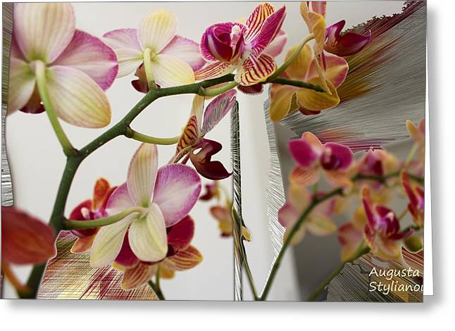 Yellow Black White Silver Greeting Cards - Orchid Flowers Greeting Card by Augusta Stylianou