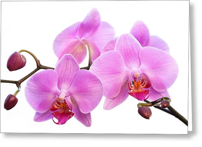 Bathroom Prints Greeting Cards - Orchid Flowers II - Pink Greeting Card by Natalie Kinnear