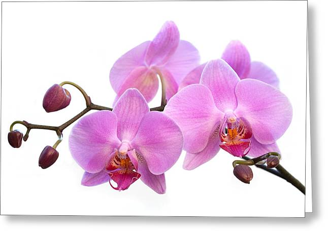 Front Room Digital Art Greeting Cards - Orchid Flowers - Pink Greeting Card by Natalie Kinnear