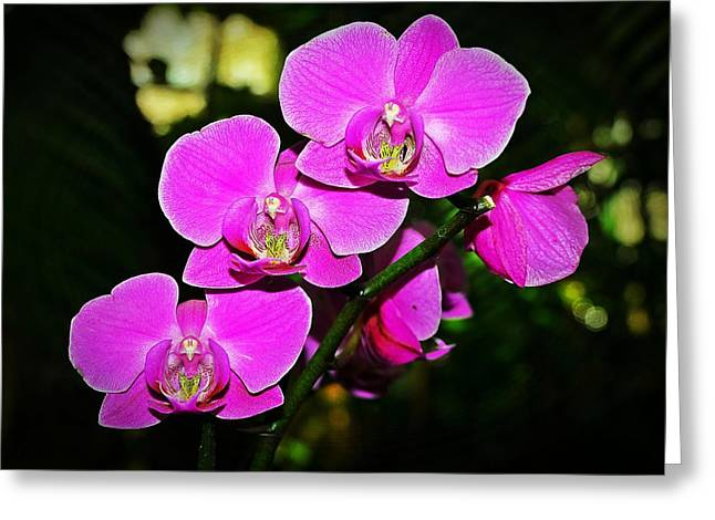 Orchid Flutter Greeting Card by Liudmila Di