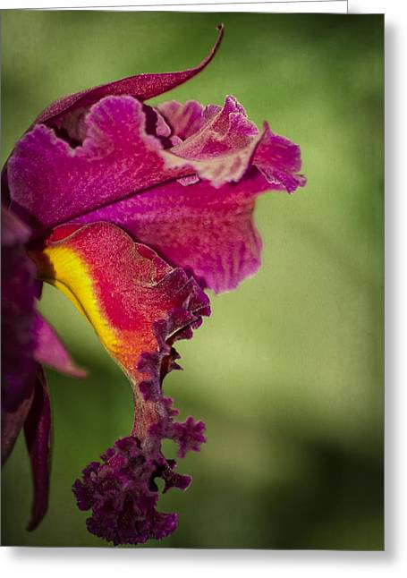 Eureka Springs Greeting Cards - Orchid Frills Greeting Card by Carolyn Marshall