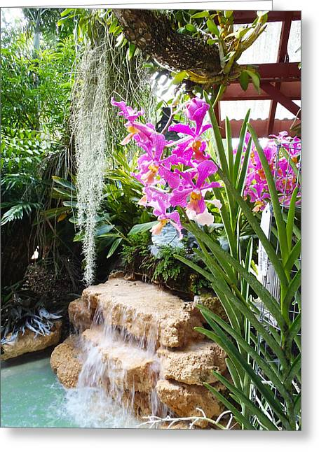 Orchid Greeting Cards - Orchid garden Greeting Card by Carey Chen