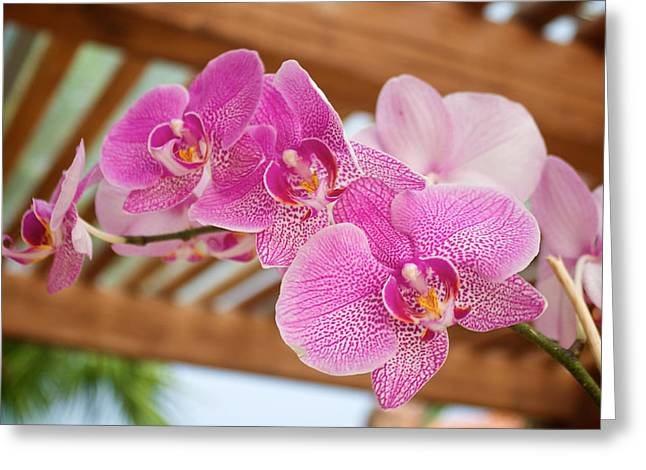Outdoor Greeting Cards - Orchid Greeting Card by Genaro Rojas