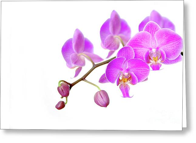 Osten Greeting Cards - Orchid Greeting Card by Hannes Cmarits