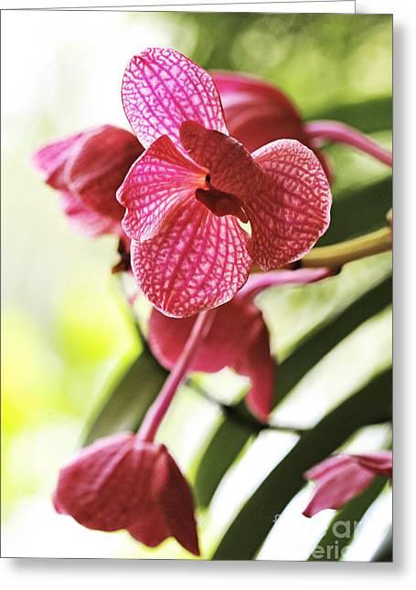 Orchid II Greeting Card by Pamela Gail Torres